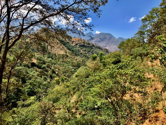 licht bewachsene Berge in Zentral Amerika, genauer gesagt in Huehuetenango auf einer Kaffee Farm. Die Hänge sind sehr steil und hoch.