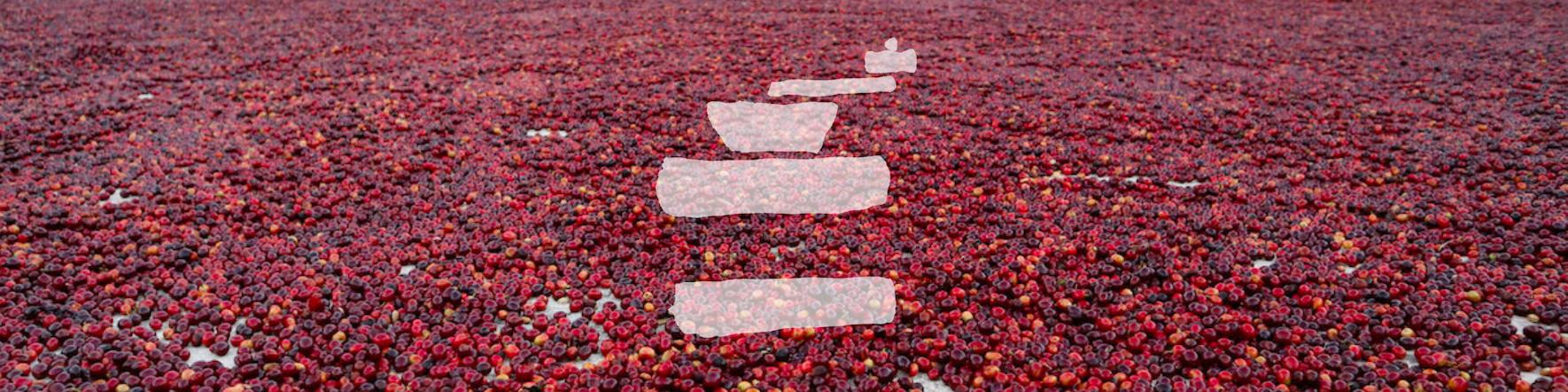 Kaffee Kirschen trocknen auf dem Hof. Das einfach mal Kaffee Logo ist als Wasserzeichen eingeblendet