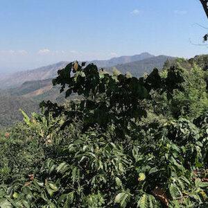 Panorama im Kaffee Ursprung, ein wichtiger Ort für mehr Nachhaltigkeit im Kaffee