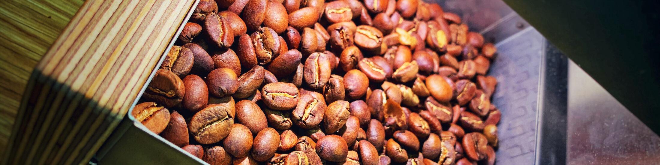 Nach dem Kaffee Rösten, die braunen Bohnen im Kühlsieb des Roest Proben Rösters. Ein Gerät das in vielen Röstereien Einzug hält.
