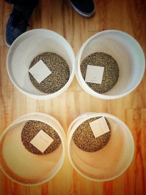 Grüne Bohnen vor dem Kaffee Rösten. In vielen Röstereien werden sie vorher in extra Behältern vorportioniert.