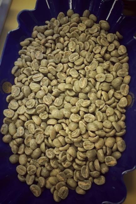 Grüne Bohnen zur Analyse in der Rösterei. Dies geschieht in der Regel weit vor dem eigentlichen Kaffee Rösten