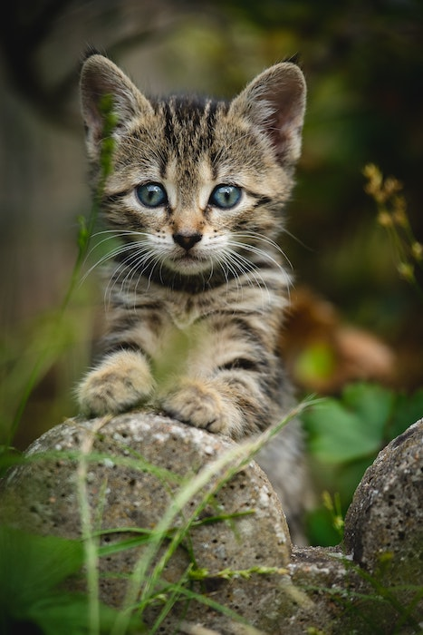 Eine graue Katze an einem Stein. Hat nichts mit Katzenkaffee zu tun, ist aber ein süßes Bild