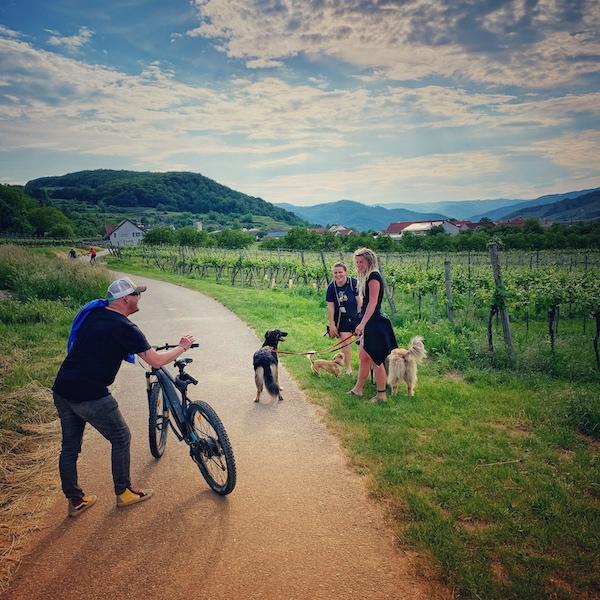 Teilnehmer der Camper Nomads Workation 2021 in der Wachau auf dem Weg aus Camp 2 nach Camp 1. Wir sehen zwei Frauen und einen Mann locker beisammenstehen auf einem Feldweg. Mit dabei zwei Hunde und ein Fahrrad. Das ganze spielt sich in Weinbergen ab. Man erkennt rechts und links Weinreben und im Hintergrund Berge und Täler.