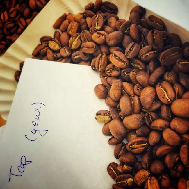 Gut entwickelte Kaffeebohnen in einer weißen Testschale. Hierbei handelt es sich um eine Proberöstung gewaschenen Kaffees immer in sehr hellen Röstgraden.