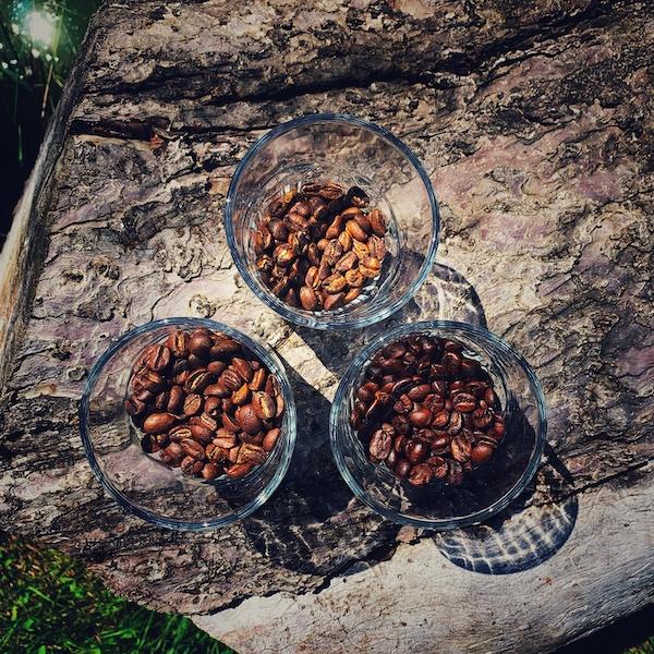 In verschiedenen Röstgraden gerösteter Kaffee in Gläsern auf einem Holzstamm aus der Vogelperspektive fotografiert.